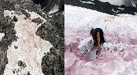 Kinh hoàng máu chảy ra từ sông băng trông như hiện trường thảm sát. Điều bí ẩn phía sau là gì?