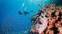 """""""Thiên đường biển"""" Great Barrier Reef trong nét văn hóa tâm linh của các chủ nhân truyền thống"""