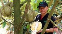 Chế biến trái cây thắng lớn, mỗi năm bán 100 tấn múi sầu riêng đông lạnh, ông chủ này không lo mùa dịch