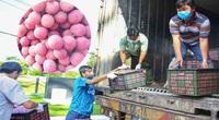 Cần Thơ tiêu thụ vải thiều Bắc Giang: Hàng trăm tấn đã được tiêu thụ, bán ở chỗ nào?
