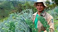 Lâm Đồng: Trồng cây đô la lạ mắt cắt cành bán, ông nông dân này thu cả trăm triệu đồng