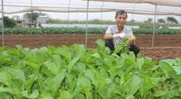 Hà Nội: Tiếp vốn giúp nông dân Chúc Sơn trồng rau an toàn