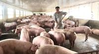 """Nông dân nuôi gà, lợn điêu đứng vì giá thức ăn chăn nuôi tăng vù vù, các """"ông lớn"""" vẫn thu lãi khủng"""