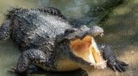 Cá sấu tiền sử mới được phát hiện có chiều dài lên tới 7 mét
