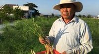 Ninh Thuận: Ở nơi nắng phai màu áo, đất khô cằn, táo, măng tây, nho vẫn cho nông dân thu tiền tỷ