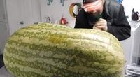 """Trái dưa hấu siêu to khổng lồ nặng gần 130kg, tới lúc xẻ ra ăn mới """"sốc nặng"""""""
