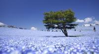 """Lạc vào công viên rộng 200 ha, nơi được mệnh danh là """"thiên đường hoa"""" của Nhật Bản"""