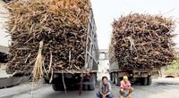 Ngành mía đường Thái Lan phản ứng về thuế chống bán phá giá, dù nhiều đề nghị trước đây bị bác bỏ