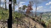 Công ty lâm nghiệp Krông Bông (Đắk Lắk): Rừng bị phá tan hoang, lãnh đạo mất đoàn kết