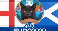 """Mèo """"tiên tri Cass"""" dự đoán tỷ số Anh vs Scotland"""