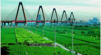 Quy hoạch hai bên sông Hồng: Vướng mắc di dân, sử dụng đất bãi