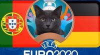 """Mèo """"tiên tri Cass"""" dự đoán tỷ số Bồ Đào Nha vs Đức"""