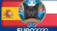 """Mèo """"tiên tri Cass"""" dự đoán tỷ số Tây Ban Nha vs Ba Lan"""