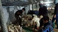 Giá gia cầm hôm nay 20/6: Vịt thịt miền Bắc đón tin vui, gà công nghiệp loại này bán trên 50.000 đồng/kg