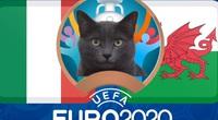 Mèo tiên tri Cass dự đoán kết quả Italia vs xứ Wales: Không bất ngờ