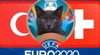 Mèo tiên tri Cass dự đoán kết quả Thụy Sĩ vs Thổ Nhĩ Kỳ: Nghiêng bên nào?