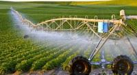 Năm 2021, các loại đất nào được miễn thuế đất nông nghiệp?