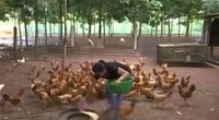 Thừa Thiên Huế: Hỗ trợ nông dân Quảng Điền cải thiện sinh kế sau mưa lũ