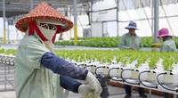 """Nông nghiệp công nghệ cao Israel tìm giải pháp """"vàng"""" cho Việt Nam"""