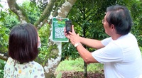 Đồng Nai: Chôm chôm Long Khánh được gắn mã QR, ngồi ở TP.HCM cũng có thể đặt hàng