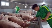 """""""Bộ ba"""" biện pháp phòng chống dịch tả lợn châu Phi, tin vui cho người nuôi lợn"""