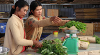 Lâm Đồng: Về Ma Đanh xem các mẹ người dân tộc Churu trồng rau hữu cơ, bán giá cao không lo Covid-19