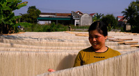Thanh Hóa: Nâng bước thương hiệu miến gạo Thăng Long  ở Nông Cống