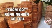 """Vụ """"thảm sát""""rừng nghiến cổ thụ """"khủng nhất"""" Việt Nam (Bài cuối): Cần sự vào cuộc của các cơ quan Trung ương"""