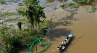 Dọc theo triền sông ở An Giang: Gõ cái nồi cơm là nghe rào rào tiếng cá về