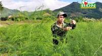 """Trồng """"vua của các loại rau"""", nông dân ở một xã vùng sâu tỉnh Đăk Nông hái ra tiền"""