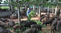 Hết 2021, Hà Nội phấn đấu thu nhập nông dân đạt 60 triệu đồng/người/năm
