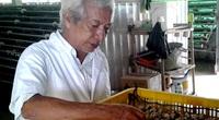"""Covid 19 Tiền Giang: """"Vua"""" nuôi chim cút miền Tây mất hợp đồng với Nhật Bản, 3 triệu trứng cút nguy cơ đổ bỏ"""