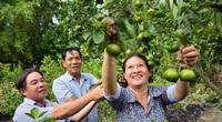 """Kiên Giang: Ruộng, vườn nuôi, """"trồng lung tung"""", ai ngờ nông dân nơi này lại kiếm bộn tiền"""