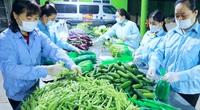 """Làm cách này, nông sản ở Hà Nội vẫn tiêu thụ """"bon bon"""" trong bối cảnh dịch Covid-19"""