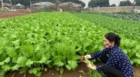 """Hà Nội: Ngày càng nhiều vùng sản xuất an toàn, nói """"không"""" với thuốc bảo vệ thực vật"""