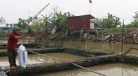 """Nam Định: Giá thức ăn nhảy như giá vàng trong khi cá tôm bán trầy trật, nông dân lỗ nặng, nhiều hộ """"treo ao"""""""