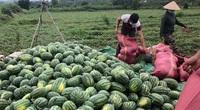Covid-19 Phú Yên: Hội Nông dân căng mình kết nối bán 150 tấn nông sản cho nông dân vùng dịch