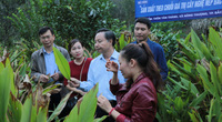 Bà Đỗ Thị Minh Hoa, Phó Chủ tịch UBND tỉnh Bắc Kạn: Làm OCOP, tỉnh biến khó khăn thành lợi thế