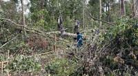 Đắk Nông: Điều tra vụ lâm tặc dùng cưa điện không tiếng ồn, phá rừng vào ban đêm