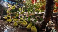 Độc nhất vô nhị Tuyên Quang: Cây mít trĩu trịt quả nằm lăn lóc như đàn lợn con trong quán cà phê