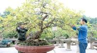 """Thái Bình: Bất kỳ cây thân gỗ nào """"rơi vào tay"""" dân làng này thì đều """"biến"""" thành cây cảnh, có cây tiền tỷ"""