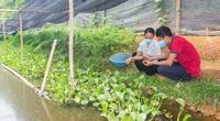 Thái Nguyên: Nuôi ốc đặc sản la liệt ở ruộng trũng, ở đây nhà nào nuôi cũng thành triệu phú
