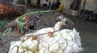 Giá gia cầm hôm nay 29/7: Giá gà công nghiệp bán chợ đầu mối tăng nhẹ, vịt thịt giảm giá