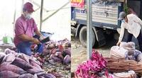 Hậu Giang: Nông dân gom hàng chục tấn bông súng, bắp chuối, đu đủ,... gửi đến vùng dịch