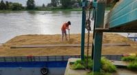 Giá lúa gạo hôm nay 31/7: Lúa hè thu ngóng ghe về thu mua, nông dân Sóc Trăng, An Giang kêu trời