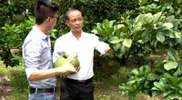 Bình Dương: Covid-19 bùng phát, chi - tổ hội nghề nghiệp vẫn phát triển mạnh nhờ Quỹ Hỗ trợ nông dân