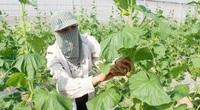 Bộ NN&PTNT thành lập tổ công tác chỉ đạo sản xuất, tiêu thụ nông sản phía Bắc