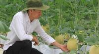 Đà Nẵng: Nông nghiệp có gì hấp dẫn mà nhiều người chọn để khởi nghiệp?