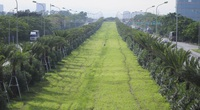 """Công ty Công viên cây xanh Hà Nội trúng hàng loạt gói thầu """"khủng"""" nào trên địa bàn Thành phố?"""