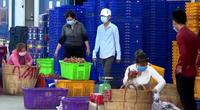 Long An: Bỏ xét nghiệm PCR cho lao động để tiêu thụ 15.000 tấn thanh long